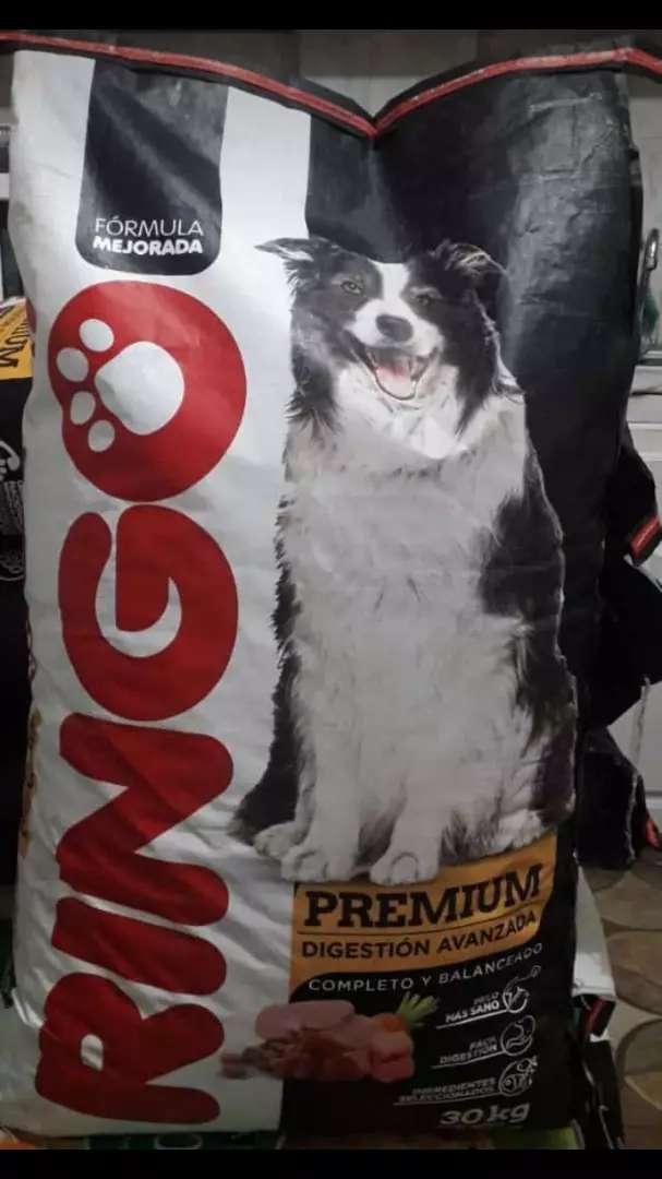 Ringo adulto premium 0