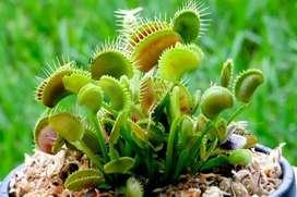 Exóticas Plantas Carnívoras