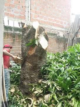 Jardinería, poda y tala de árboles