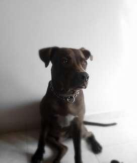 Se Necesita Peluquero Canino con Experie