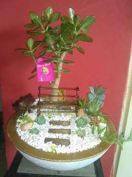 Mini jardín con suculentas