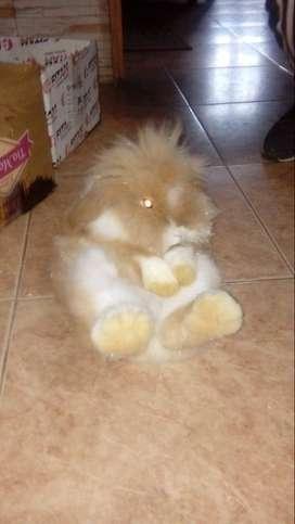 Pareja de conejos adultos para mascotas. O reproductores.