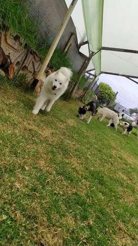 Auxiliar veterinario - cuidador canino
