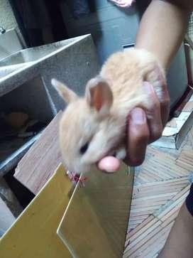 Se vende conejos de 20 dias de nacidos en cali calle