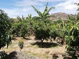 Terreno urbanizado en Ambuqui