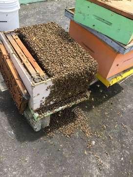 vendo una colmena de abejas