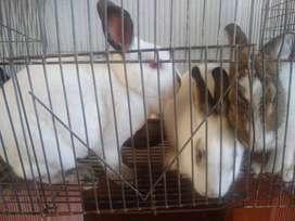 Conejos venta