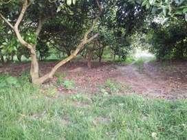 Venta de terreno en Guayllabamba, campo, calidez , tranquilidad
