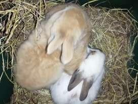 Criadero de conejos Monte de Sión