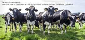 Se necesita empleado para trabajar con vacas de leche en ordeño mecanico