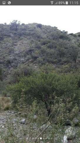 168 ha Campo de Sierra  con Arroyo y vertiente ideal cabras
