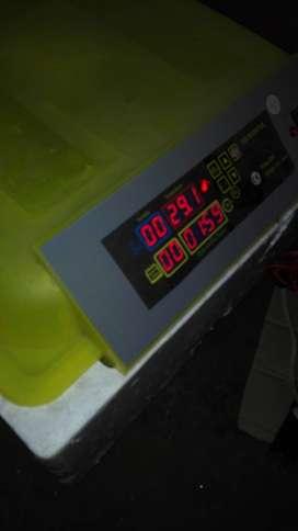 venta de incubadora automatica de 48 huevos