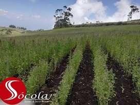 Venta de 5 hectáreas Productivas en Mira  Carchi