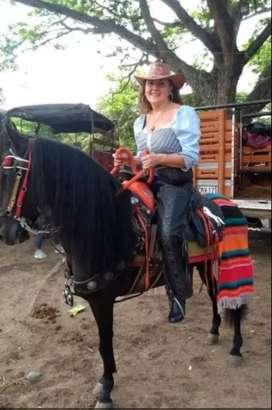Excelente caballo
