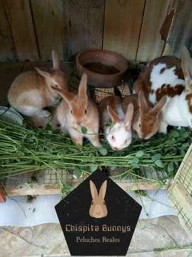 En venta conejitos para mascota, no cárnicos !