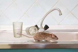Ratones -roedores-ratas, madrigueras, controles efectivos Fumigaciones Bogota(pulgas)
