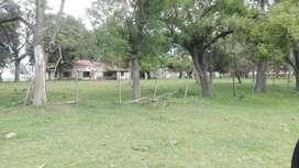 Se vende campo de 350 has  en Bragado, SE FINANCIA!