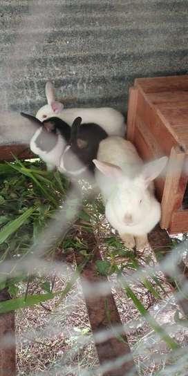 Se vende  conejos a 8 mil pesos la libra