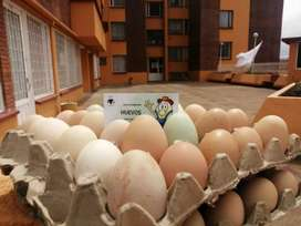 Huevos 100% Campesinos