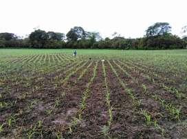 Se vende Hacienda con abundante agua para siembra en Balzar, Guayas