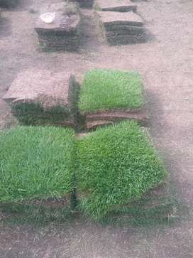 Venta y siembra de grama