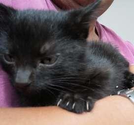 Gaticos  en adopcion