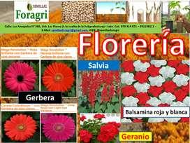 Venta de semillas de flores para jardín y parques