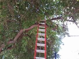 Podamos, cortamos extraemos todo tipo de árboles parras frutales.. limpiamos palmeras..desmontamos lotes