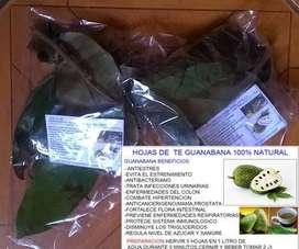 en venta Hojas de te de guanabana producto 100% natural:,disminuye los trigliceridos,regula nivel de azucar y sangre