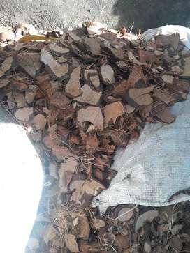 Cascara de coco para la elavoracion de carbon activado