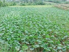Venta de terreno de 4 hectáreas
