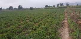 venta de 3 y/o 5 ha de terreno agrícola