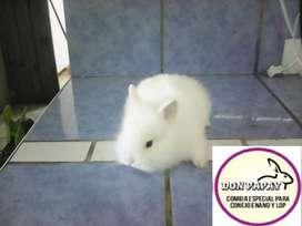 Se vende Conejos Enanos
