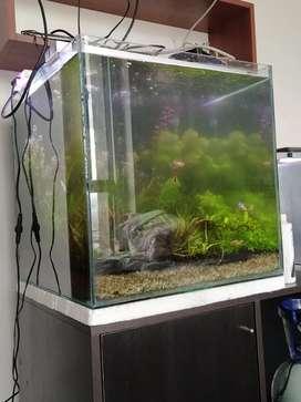 Se vende acuario de 125 litros.