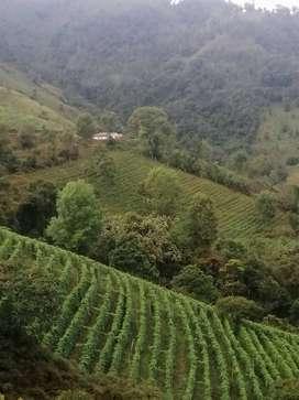 Vendo Hermosa finca en Cajamarca Tolima. 22 hectáreas. Excelentes fuentes hidricas.