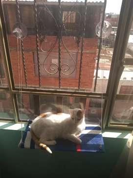 Hamaca ventana para gatos