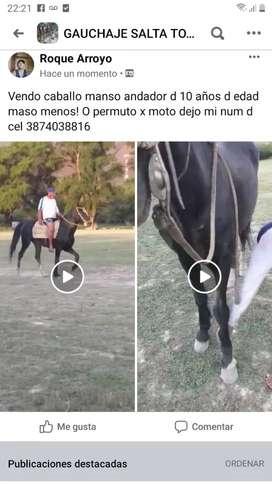 Vendo caballo manso andador