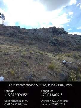 1300 hectáreas