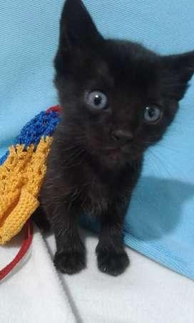 Gato para adopcion