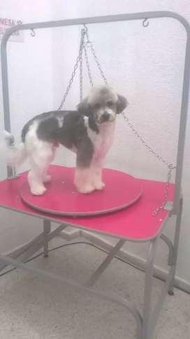 Mesa peluquería canina con dispositivo giratorio inmovilizadores y niveladores de piso