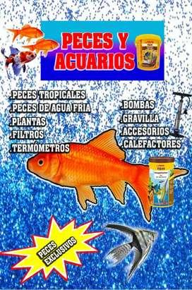 Venta de peces desde $0.80 ctv accesorios