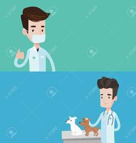 Emergencias veterinarias 24h