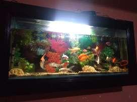 Vendo pecera tipo plasma de metro de ancha x 60 cm de largo con unos peces hermosos y algunos escasos