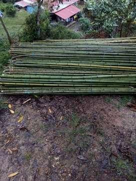 guaduas y bambu duque argemiro