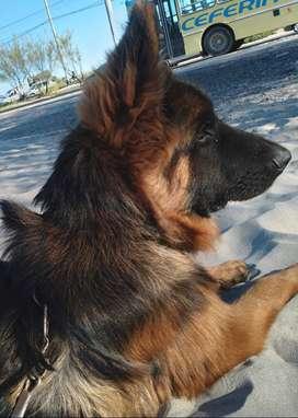 Vendo cachorro 7 meses