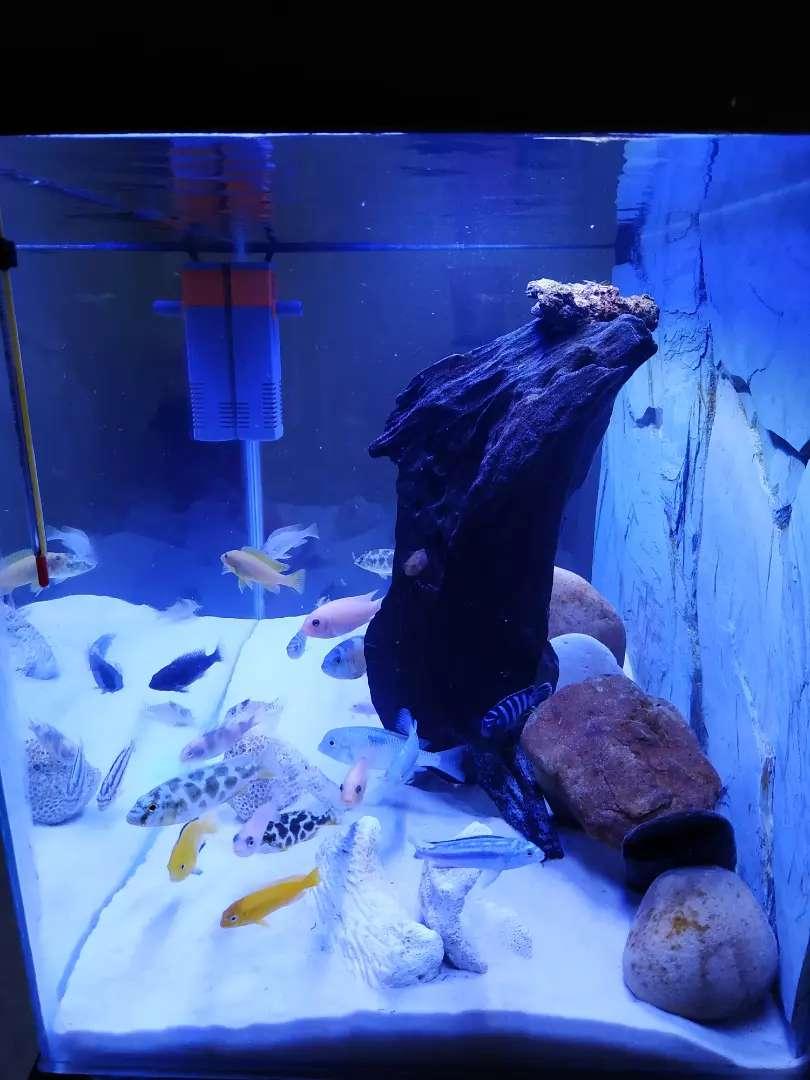 Espectacular acuario 115 litros con filtración sump back 0