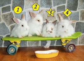 oferta de conejitos enanos de mascota
