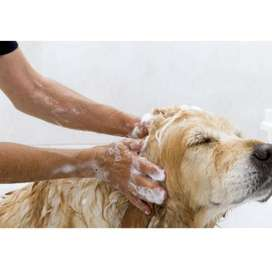 Shampoo jabón mascotas antipulgas 250ml perros gatos