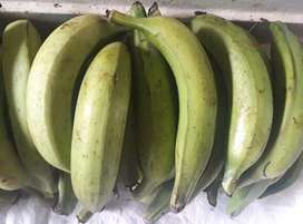 Se vende plátano harton