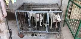 Jaulas para perros de acero inoxidable